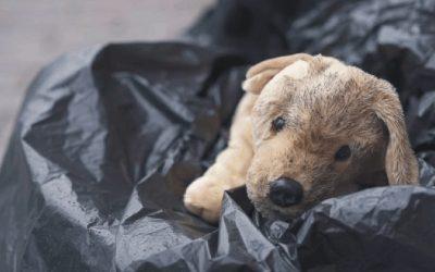 Un perro es para toda la vida, no solo por Navidad