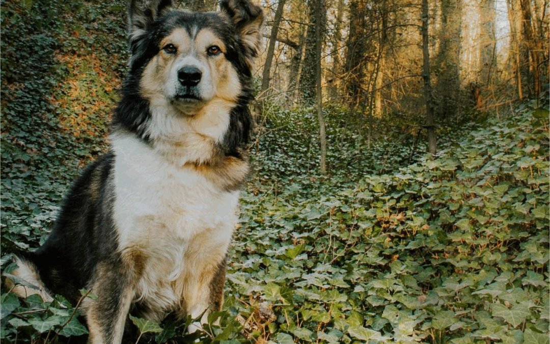 Dale a tu perro el valor que se merece