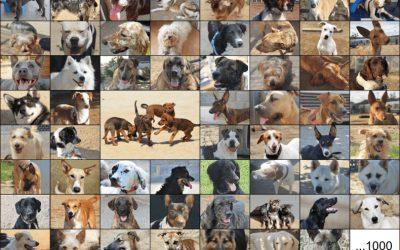 1000 gossos no és només un número