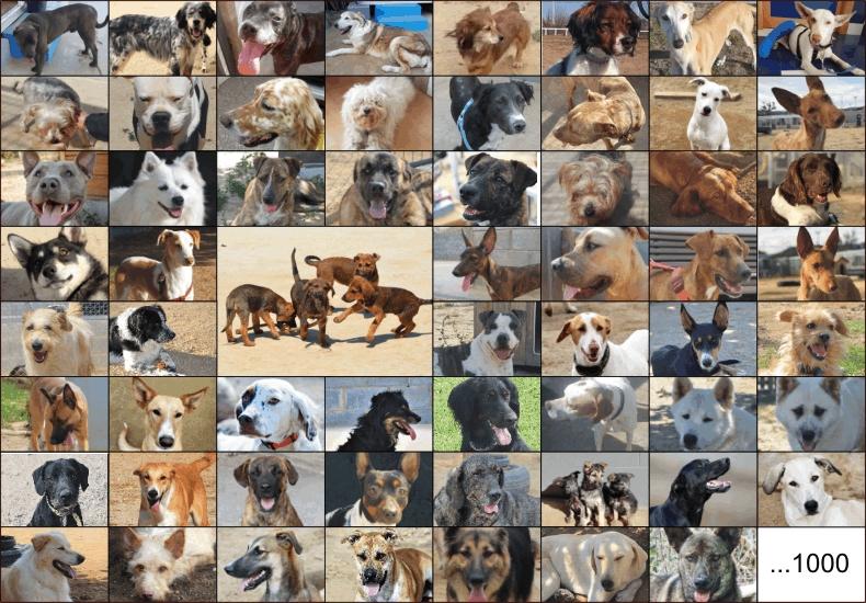 1000 perros no es sólo un número.